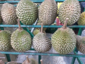 Just some of the thousands of durians there